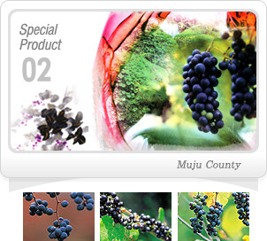 Special Product02_Bandibbul Wild Berry wine